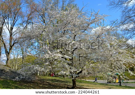 NEW YORK CITY - APRIL 22, 2014: Central Park in the spring, New York City, USA. - stock photo