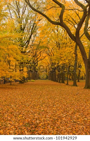 New York City Central Park alley in the Fall. - stock photo