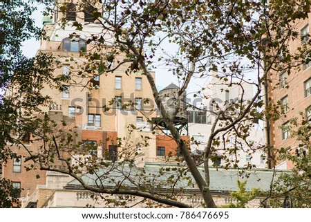 New York City cityscape through the trees with high rise buildings and a rooftop water tower