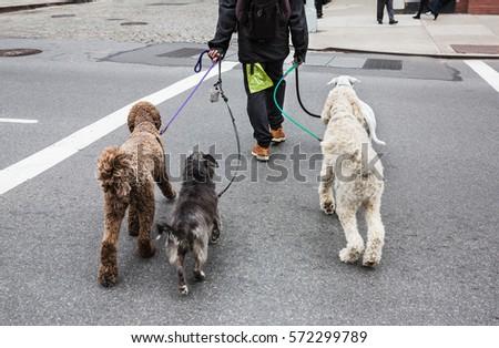 New york dog owner dating