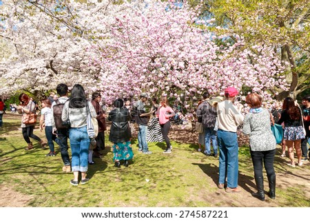 New York City, USA - April 28, 2015: Visitors enjoy the cherry blossoms at the Brooklyn Botanic Garden in New York City.