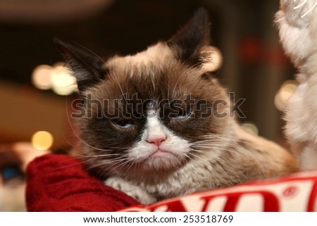 NEW YORK - FEB 15, 2015: Grumpy Cat  attends the 2015 Toyfair at the Jacob Javitz Center on February 15, 2015 in New York. - stock photo