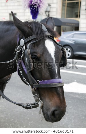 NEW YORK, NEW YORK - SEPTEMBER 4: Close up of horse used for drawing carriage in Manhattan.  Taken September 4, 2015 in  New York.