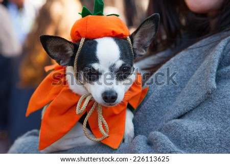 NEW YORK - OCTOBER 25, 2014: Scenes from The 24th Annual Tompkins Square Halloween Dog Parade