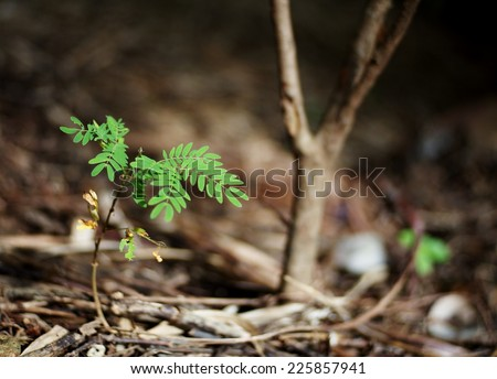 new young deep green leaves small plant growing after rainy week on the brown earth sand floor under bright natural sunlight - stock photo