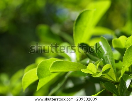 new young light green leaves growing blooming after rainy night under bright natural sunlight in jungle with natural bokeh background - stock photo