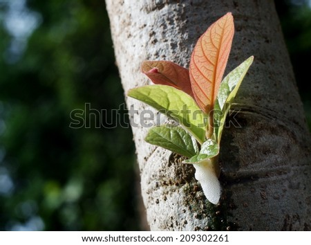 new young light green yellow pink colorful leaves growing blooming on a white tropical tree after rainy night under bright natural sunlight in jungle with natural bokeh background - stock photo