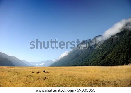 New Zealand - stock photo