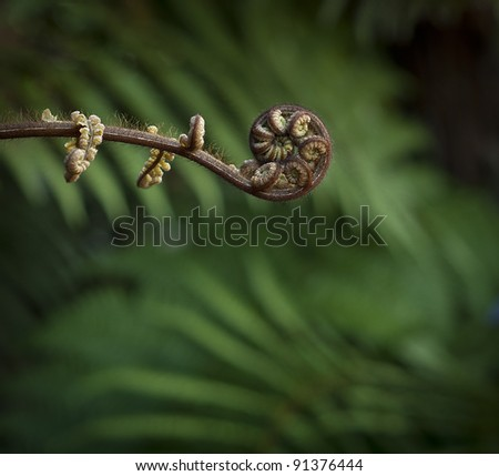 New Zealand Fern - stock photo
