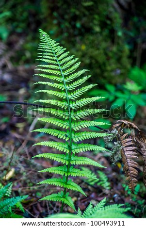 New Zealand fern forest in the town of Fox Glacier, South Island - stock photo