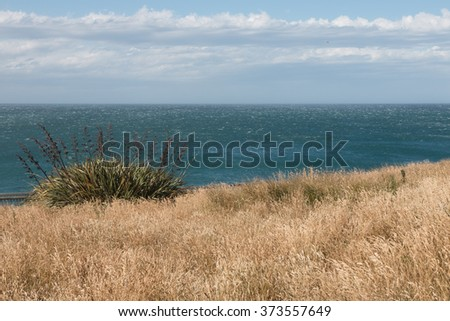 New Zealand flax on the ocean shore, South Island, New Zealand - stock photo