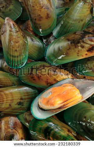 New Zealand green mussels background - stock photo