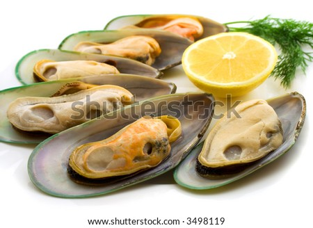 New Zealand green mussels on white - stock photo