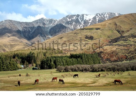 New Zealand horses and mountains  - stock photo