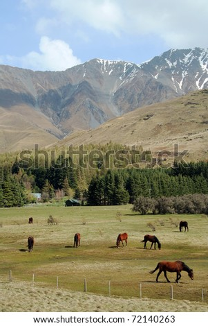 New Zealand horses and mountains