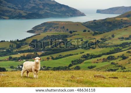 New Zealand landscape, Banks Peninsula - stock photo