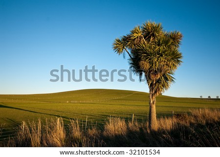 New Zealand landscape featuring rolling farmland and native cabbage tree - stock photo