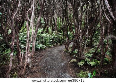 New Zealand native bush - rata forest at Bluff. - stock photo