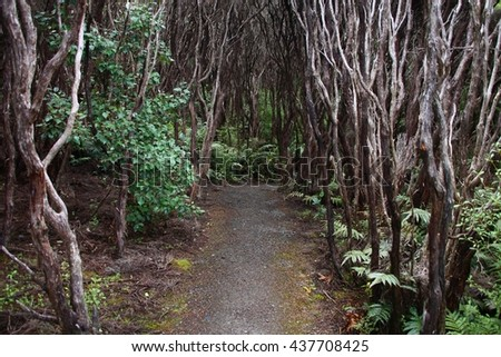 New Zealand nature. Endemic native bush - rata forest at Bluff. - stock photo
