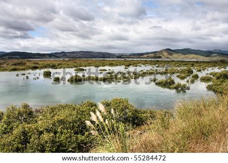 New Zealand, North Island. Waitekuri river estuary on Coromandel peninsula. Swamps and marshes. - stock photo