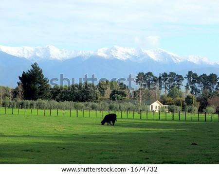 New Zealand pastoral scene - stock photo