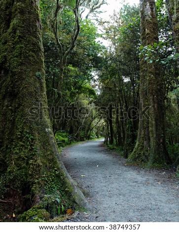 New Zealand rain forest landscape - stock photo