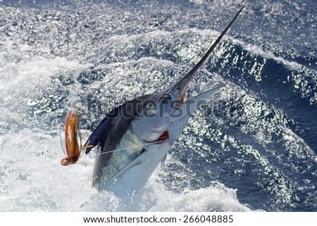 New Zealand striped marlin - stock photo