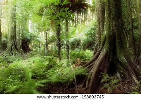 New Zealand tropical forest jungle - stock photo