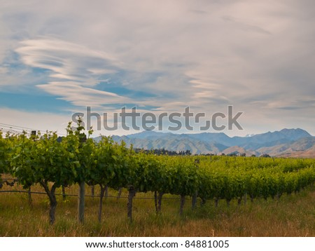 new zealand vineyard sideview under dramatic sky with lenticular clouds - stock photo