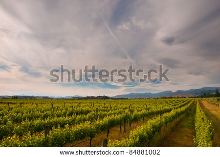 new zealand vineyard under dramatic cloudy sky - stock photo