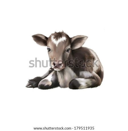 Newborn Calf, black and white baby cow, on the white isolated background - stock photo