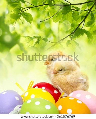 newborn chickens and easter eggs - stock photo