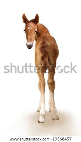 Newborn foal - stock photo