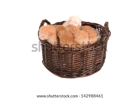 Newborn ginger, orange, white, marmalade, and champagne kittens in a basket. - stock photo