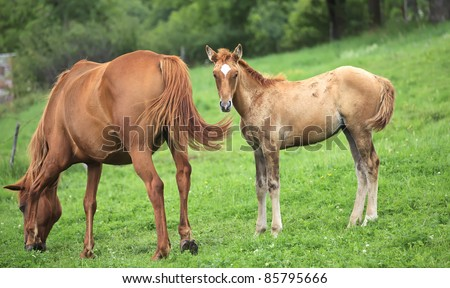 Newborn horse stands beside his mother - stock photo