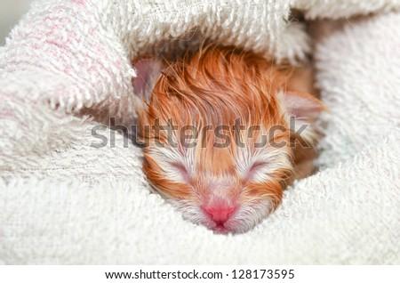 newborn kitten - stock photo
