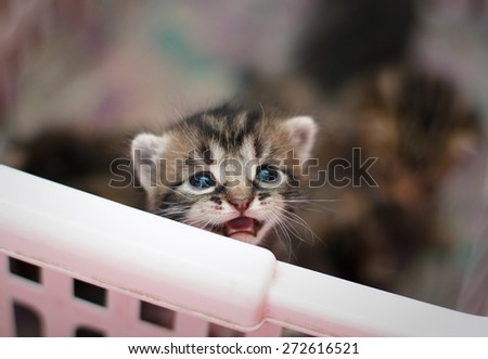 newborn kitten looks from basket - stock photo