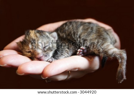 newborn kitten sleeping on a woman hand