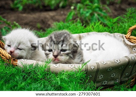 newborn kittens in the basket on the nature.Selective focus - stock photo