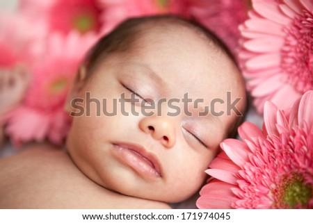 Newborn mixed race hispanic caucasian baby girl sleeping in a bed of pink gerbera daisy flowers - stock photo