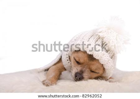 Newborn puppy sleeping lying on white fluffy fur, isolated on white background - stock photo