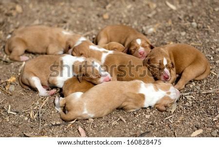 Newborn sleeping dogs on the nature - stock photo