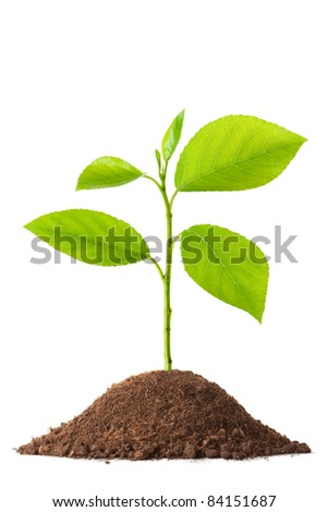 Newborn small green plant. Isolated on white. - stock photo