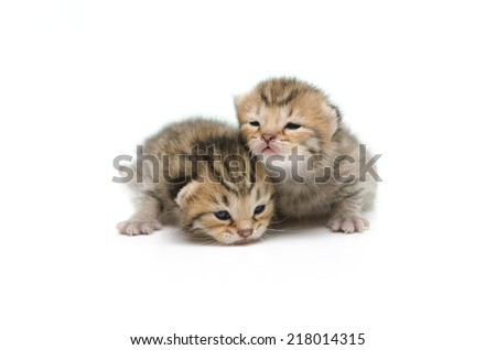 Newborn tabby kitten on white background isolated