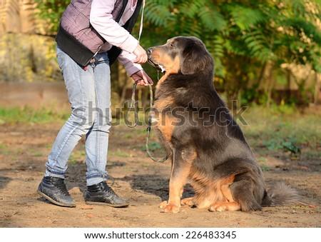 Newfoundland dog with owner - stock photo