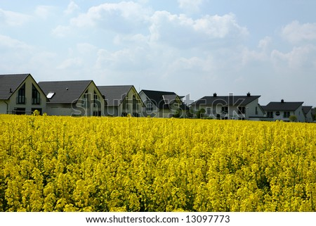newly built white homesteads in the middle of an agriculture area with a blooming canola field