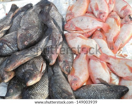 Newly catch bunch of Tilapia fish on the market - stock photo
