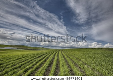 Newly Planted Crop in Saskatchewan Canada summer - stock photo