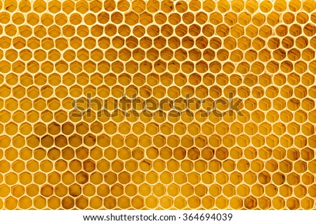 Newly Pulled Honey Bee Honeycomb Beeswax On Plastic Foundation With Pollen Tracks