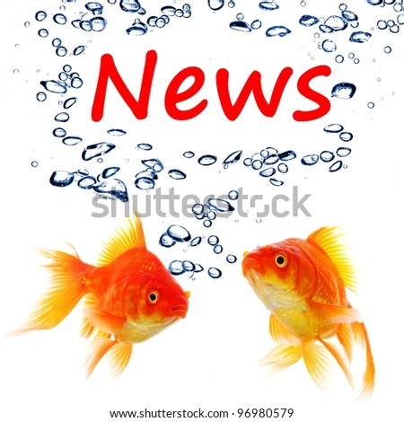 news or newsletter concept with word and goldfish on white background - stock photo